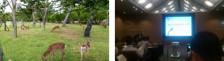 奈良公園の鹿と発表の様子
